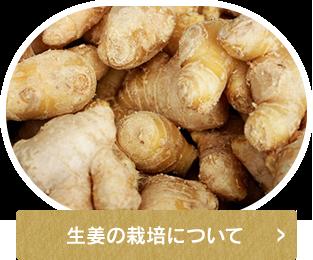 生姜の栽培について